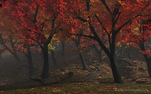 autumnal_preview